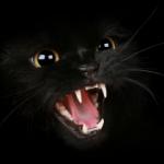 Illustration du profil de chelonia